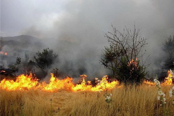 آتش سوزی گسترده اراضی منابع طبیعی شهرستان دماوند
