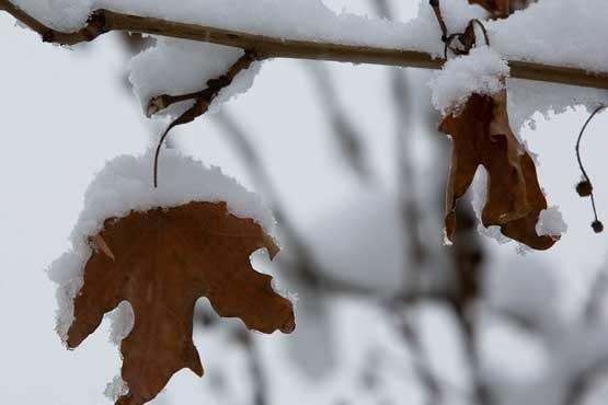 هشدار بارش شدید برف و باران، پیش بینی برف 1.1 متری در برخی استان ها