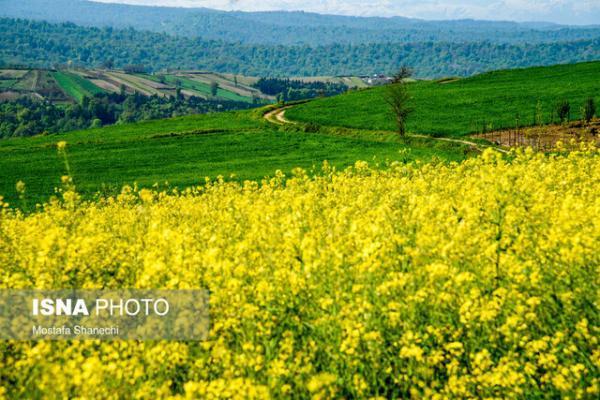 86 درصد روغن نباتی مصرفی کشور از خارج تأمین می گردد